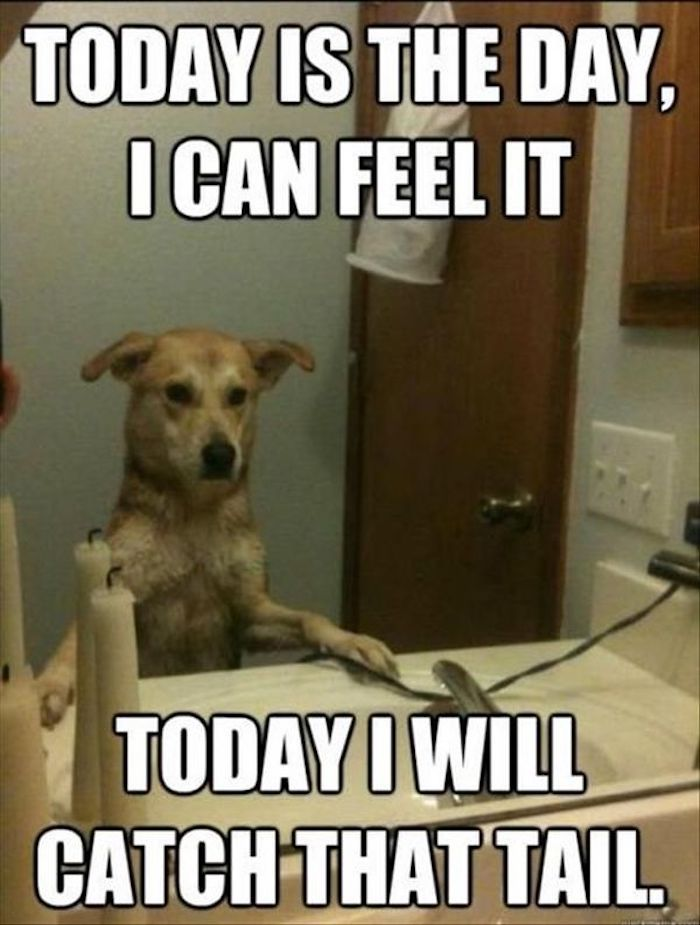 Funny Animal Memes That Are Actually Inspiring Girlslife,Pale Lavender Lavender Bedroom Walls